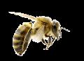 bees-flo2